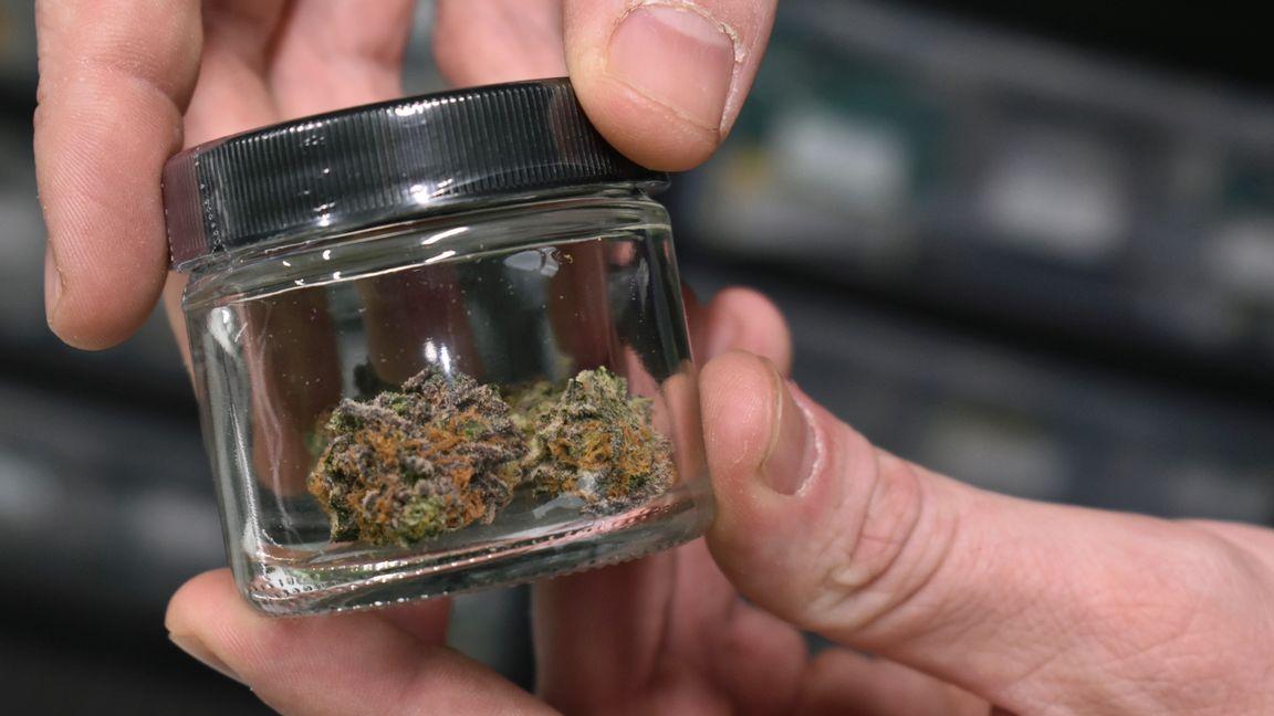 Medicinsk marijuana till försäljning i den amerikanska delstaten Montana i november 2020. Arkivbild. Foto: Matthew Brown/AP/TT.